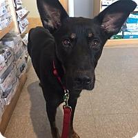 Adopt A Pet :: Athena - Saskatoon, SK