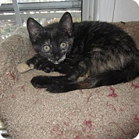 Adopt A Pet :: Emma - Long Beach, CA