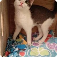 Adopt A Pet :: Holly - Titusville, FL