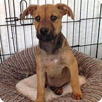Adopt A Pet :: HANK - Portsmouth, NH