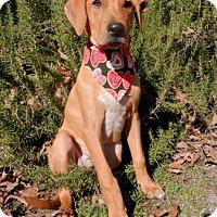 Adopt A Pet :: Charlie - Tyler, TX