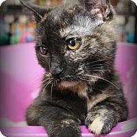 Adopt A Pet :: Keena - Springfield, PA