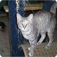 Adopt A Pet :: Rachael - Hamburg, NY