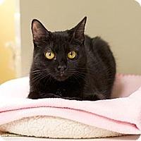Adopt A Pet :: Ollie - Island Park, NY