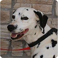 Adopt A Pet :: Dottie - Newcastle, OK