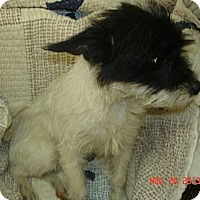 Adopt A Pet :: Fritz - Stilwell, OK