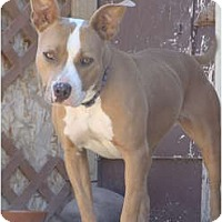 Adopt A Pet :: FeBee - Medicine Hat, AB