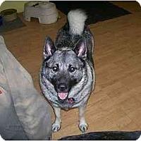 Adopt A Pet :: Luna - Belleville, MI