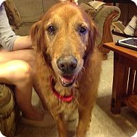 Adopt A Pet :: Max - Yorktown, VA