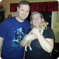 Adopt A Pet :: Hazel - Sacramento, CA