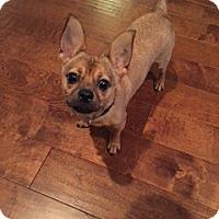 Adopt A Pet :: WESLEY (GS) - Tampa, FL