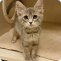 Adopt A Pet :: Belle - Phoenix, AZ