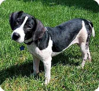 Elyria Ohio Dog Training