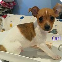Adopt A Pet :: Carl - House Springs, MO