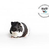 Adopt A Pet :: Double Stuff - Alexandria, VA