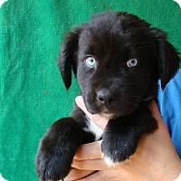 Adopt A Pet :: Tiara - Oviedo, FL