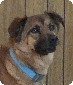 German Shepherd Dog Mix Dog for adoption in Breese, Illinois - Ginger