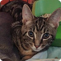 Adopt A Pet :: Hawk - Middletown, NY