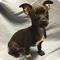 Adopt A Pet :: Bronson (ARSG) - Santa Ana, CA