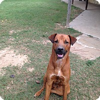 Adopt A Pet :: Red - Madisonville, TX