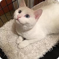 Adopt A Pet :: Sparkle - Butner, NC