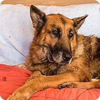 Adopt A Pet :: Max Sr - Phoenix, AZ