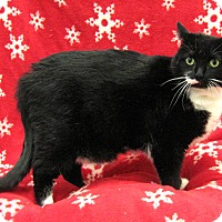 Adopt A Pet :: Sox - Redwood Falls, MN