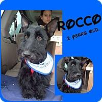 Adopt A Pet :: Rocco - LAKEWOOD, CA