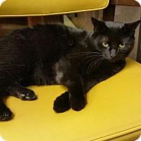 Adopt A Pet :: Willie - Medina, OH