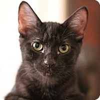 Adopt A Pet :: Ouzo - Chicago, IL