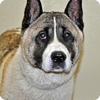 Adopt A Pet :: Jake - Port Washington, NY
