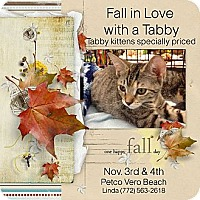 Adopt A Pet :: Tabby adoption event - Vero Beach, FL