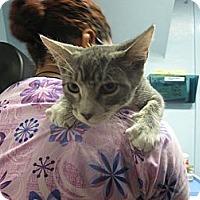 Adopt A Pet :: Marina - New York, NY