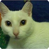 Adopt A Pet :: Snow White - Bunnell, FL