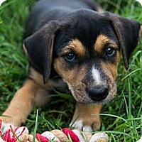 Adopt A Pet :: *Ireland - PENDING - Westport, CT