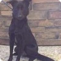 Adopt A Pet :: Heart - River Falls, WI