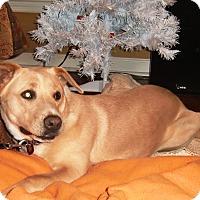 Adopt A Pet :: Aspen - Huntsville, AL