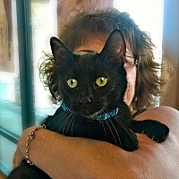 Adopt A Pet :: Manford - Palm Springs, CA