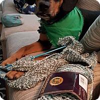 Adopt A Pet :: Tres - Alpharetta, GA