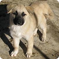 Adopt A Pet :: Echo - Charlemont, MA