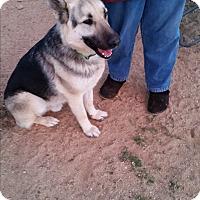 Adopt A Pet :: Nash - Victorville, CA