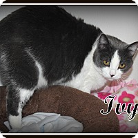 Adopt A Pet :: Ivy - Salem, OH