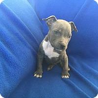 Adopt A Pet :: Walter - New Port Richey, FL