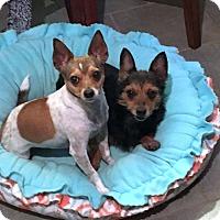 Adopt A Pet :: Bree and Brady - Huntsville, AL