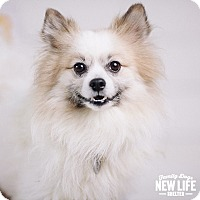 Adopt A Pet :: Louie Britches - Portland, OR