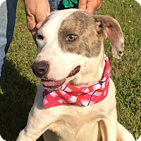 Mountain Cur Mix Dog for adoption in Trenton, New Jersey - Cleo