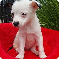 Adopt A Pet :: Sissy - Bridgeton, MO