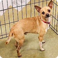 Adopt A Pet :: JJ - Greensboro, GA