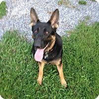 Adopt A Pet :: Kitsune - Greeneville, TN