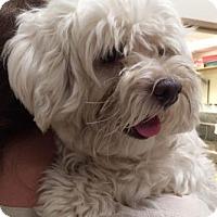 Adopt A Pet ::  - Bryan, TX